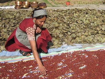Wild Earth Nepal drying herbs