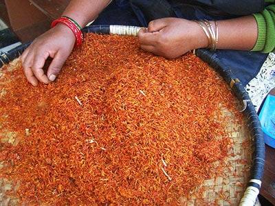 Wild Earth Nepal sorting safflower