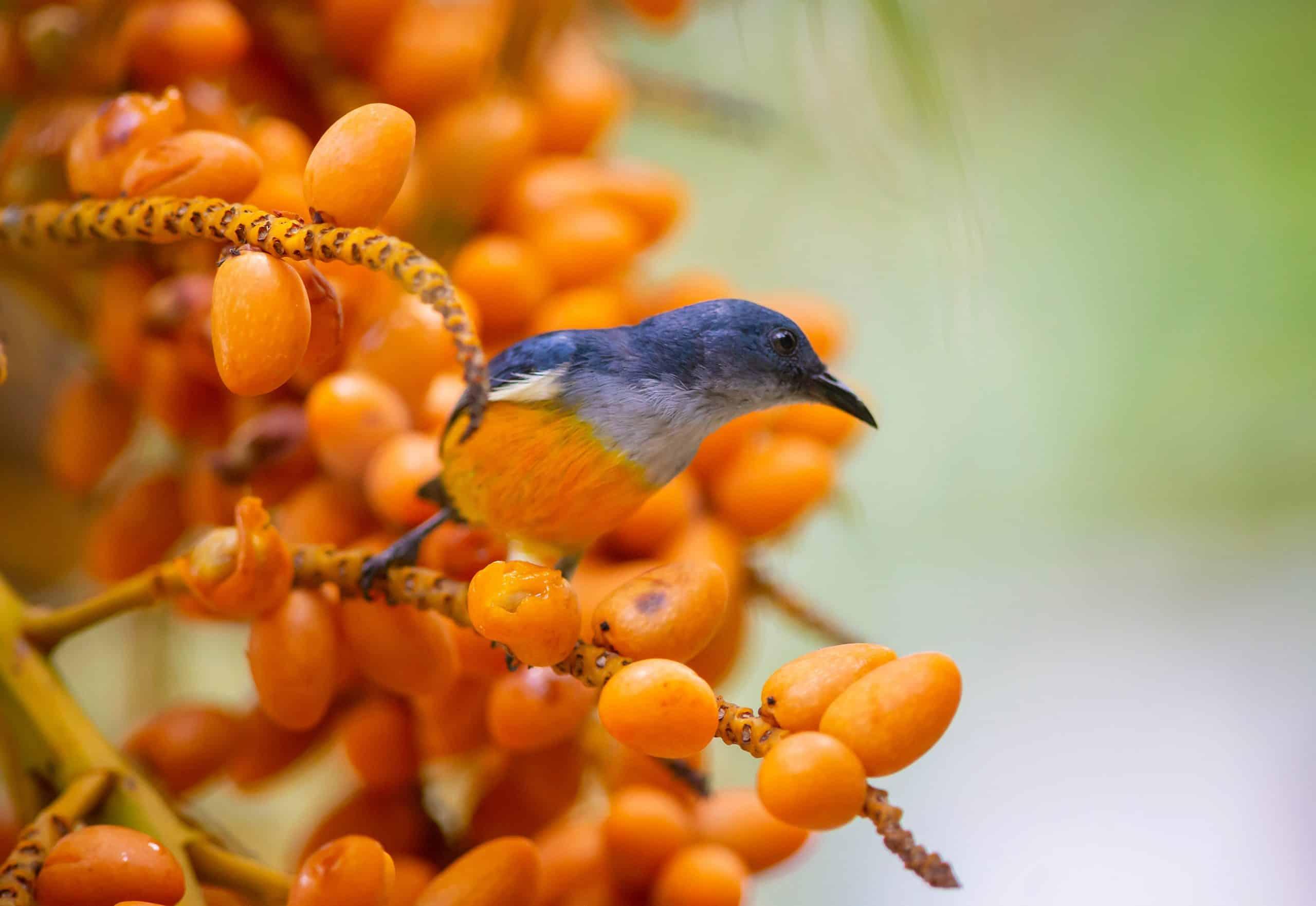 Blue & Orange Bird by Erik Karits