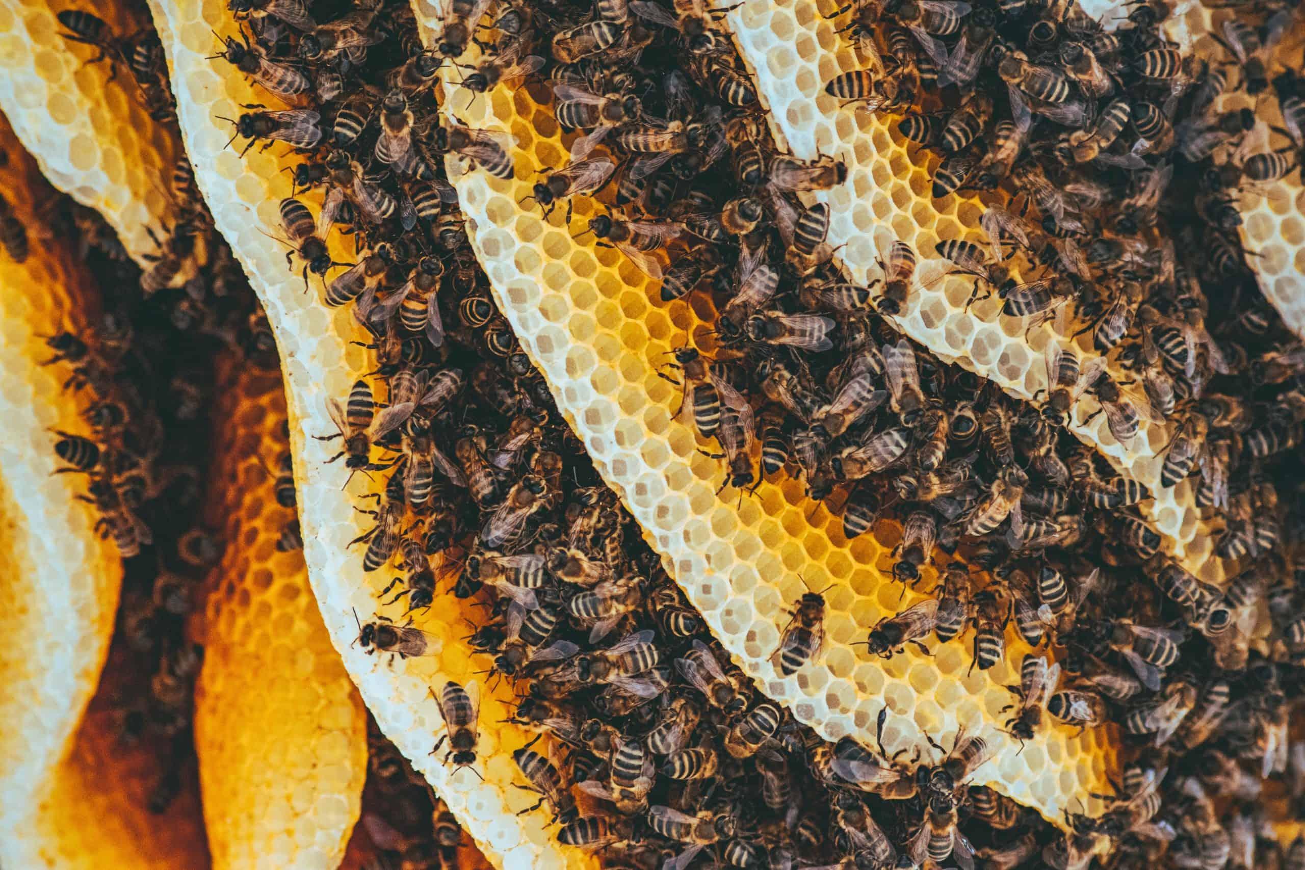 Beehive by Ion Ceban
