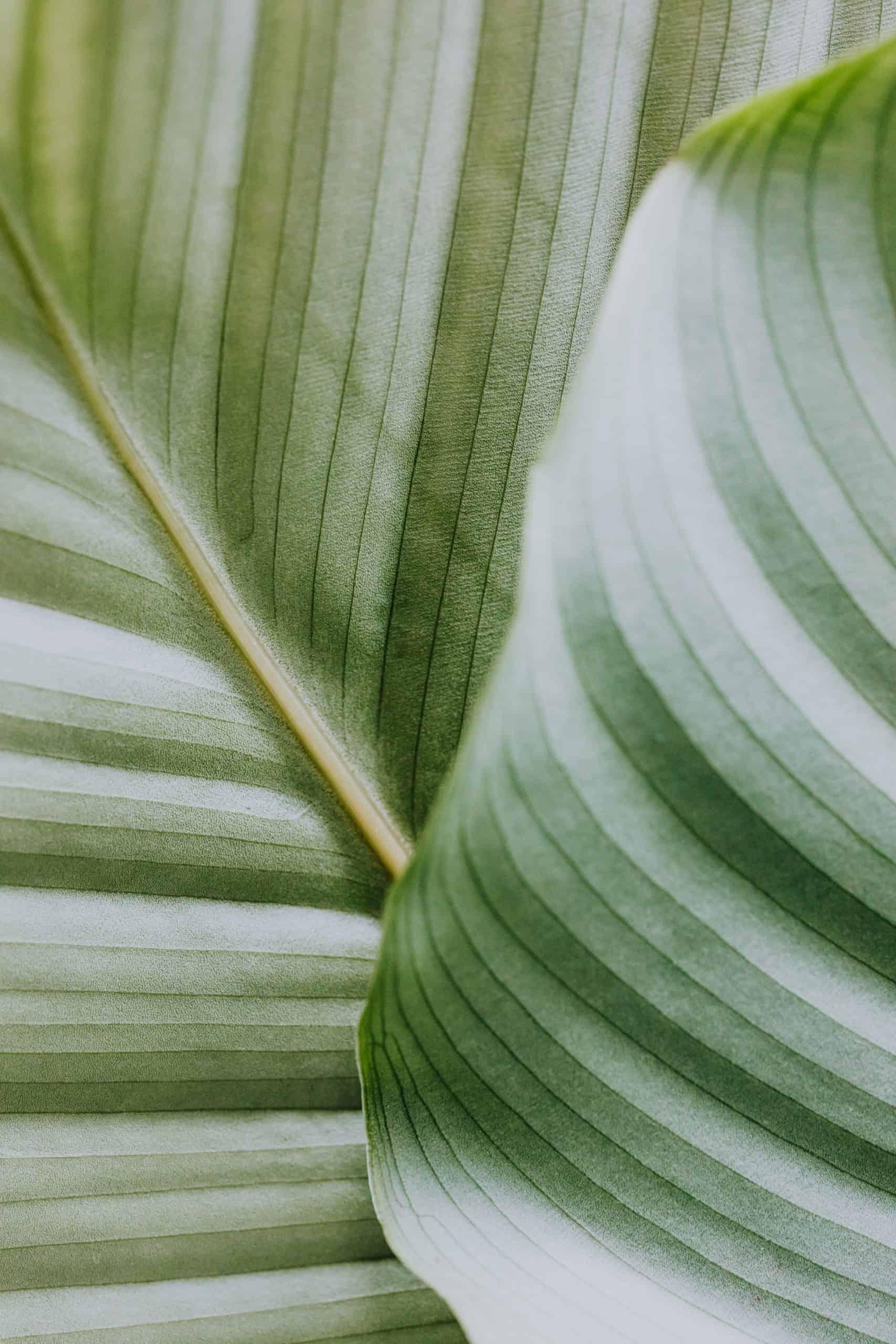 Linear Leaves by Karolina Grabowska