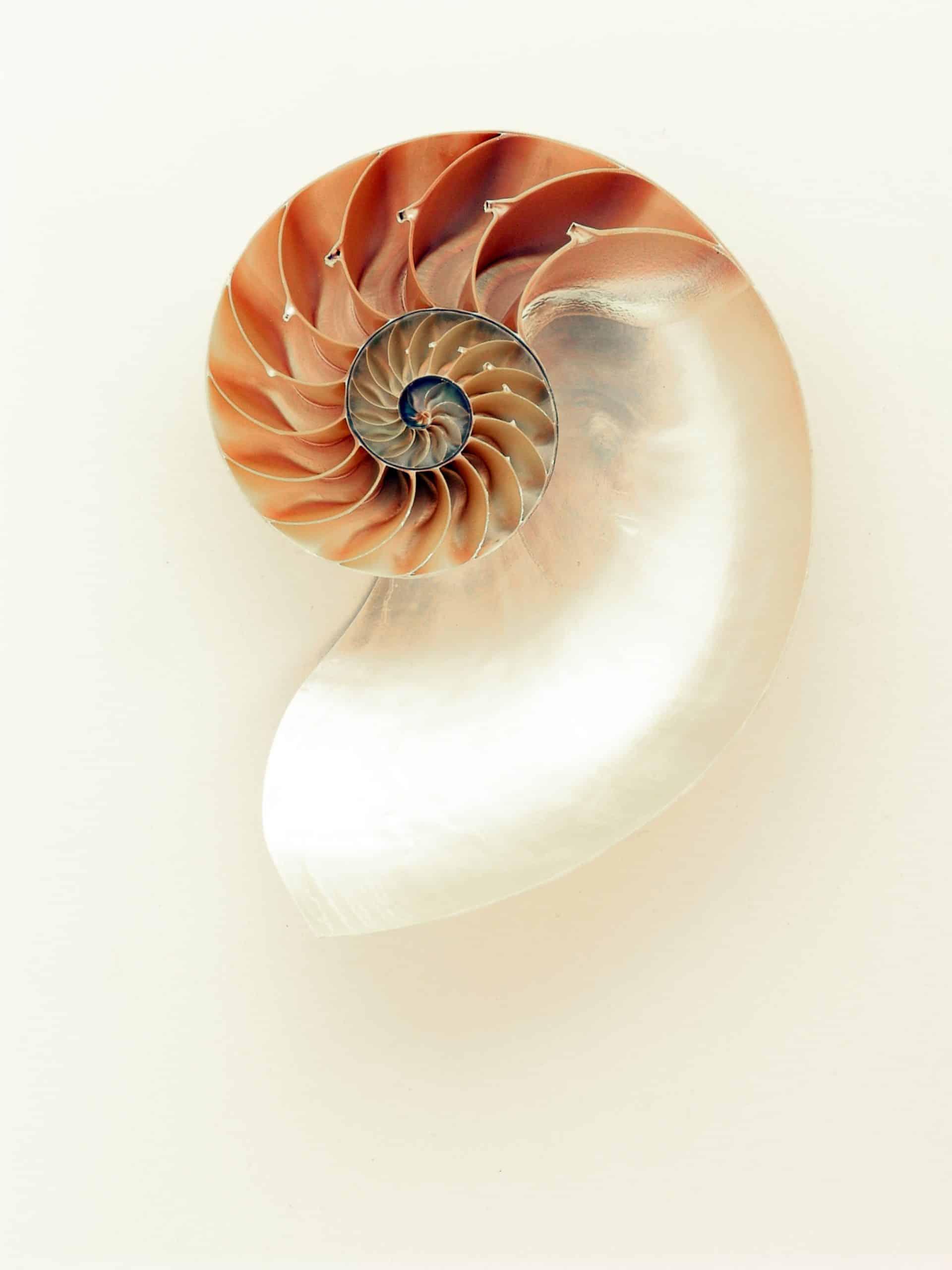 Shell Symmetry